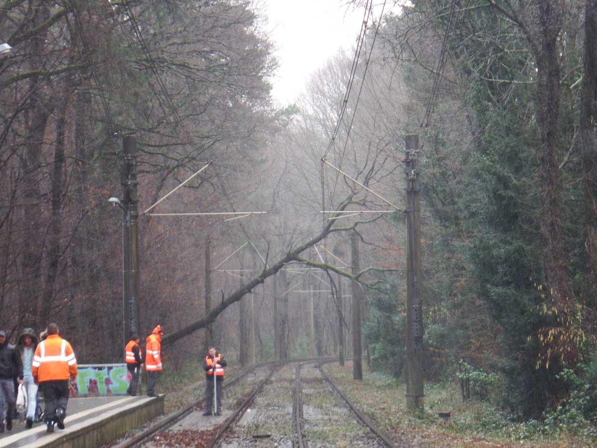 Sturmschäden: Entfernung eines umgestürzten Baumes über den KVB-Gleisen.