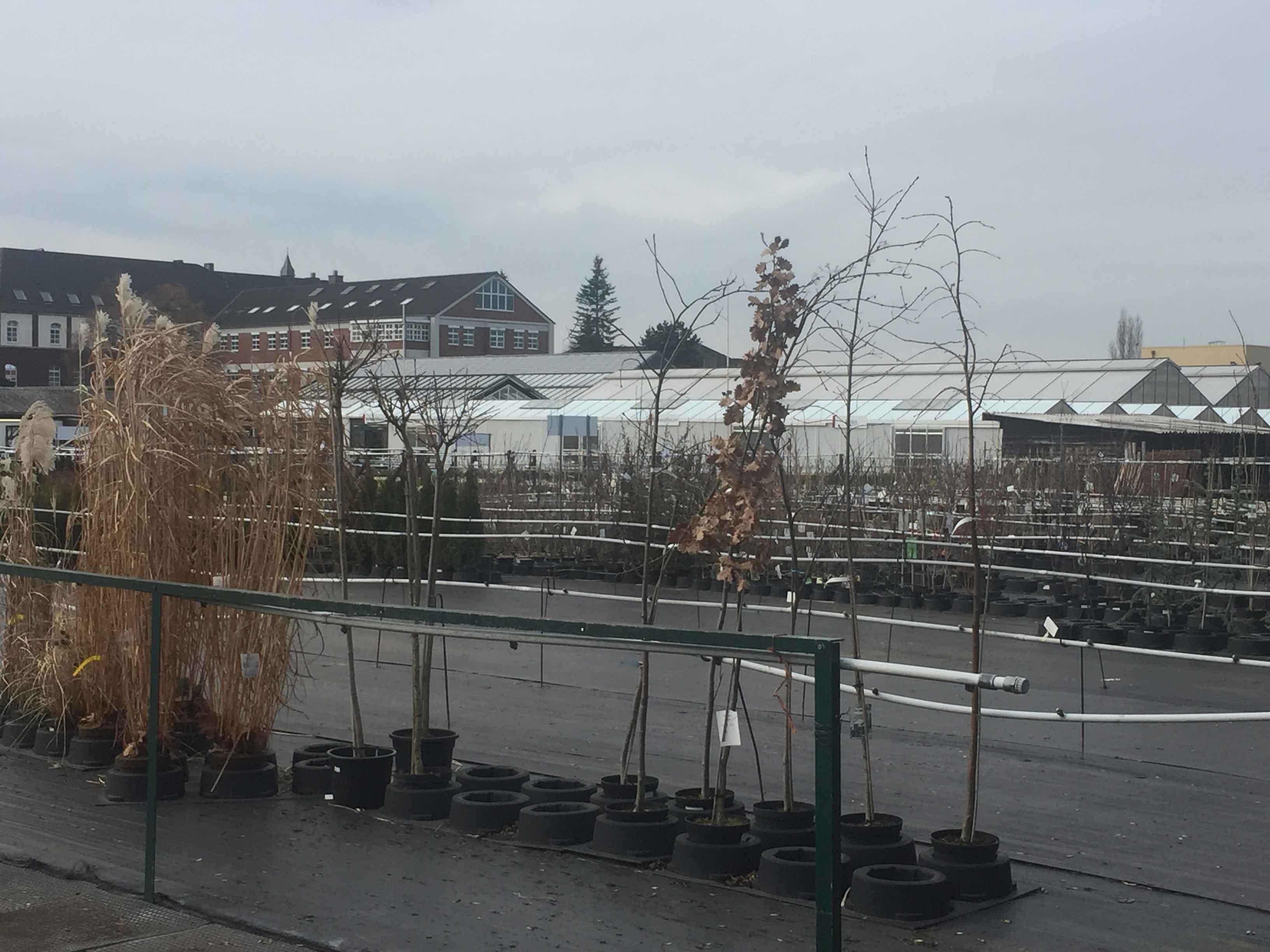 Kurz vor Porz befindet sich der kleine Stadtteil Ensen und in ihm das Kloster der Alexianer. Hier können Gartenfreunde mit den ersten Frühlingstagen wieder aus einem reichhaltigen Angebot der Gärtnerei auswählen.