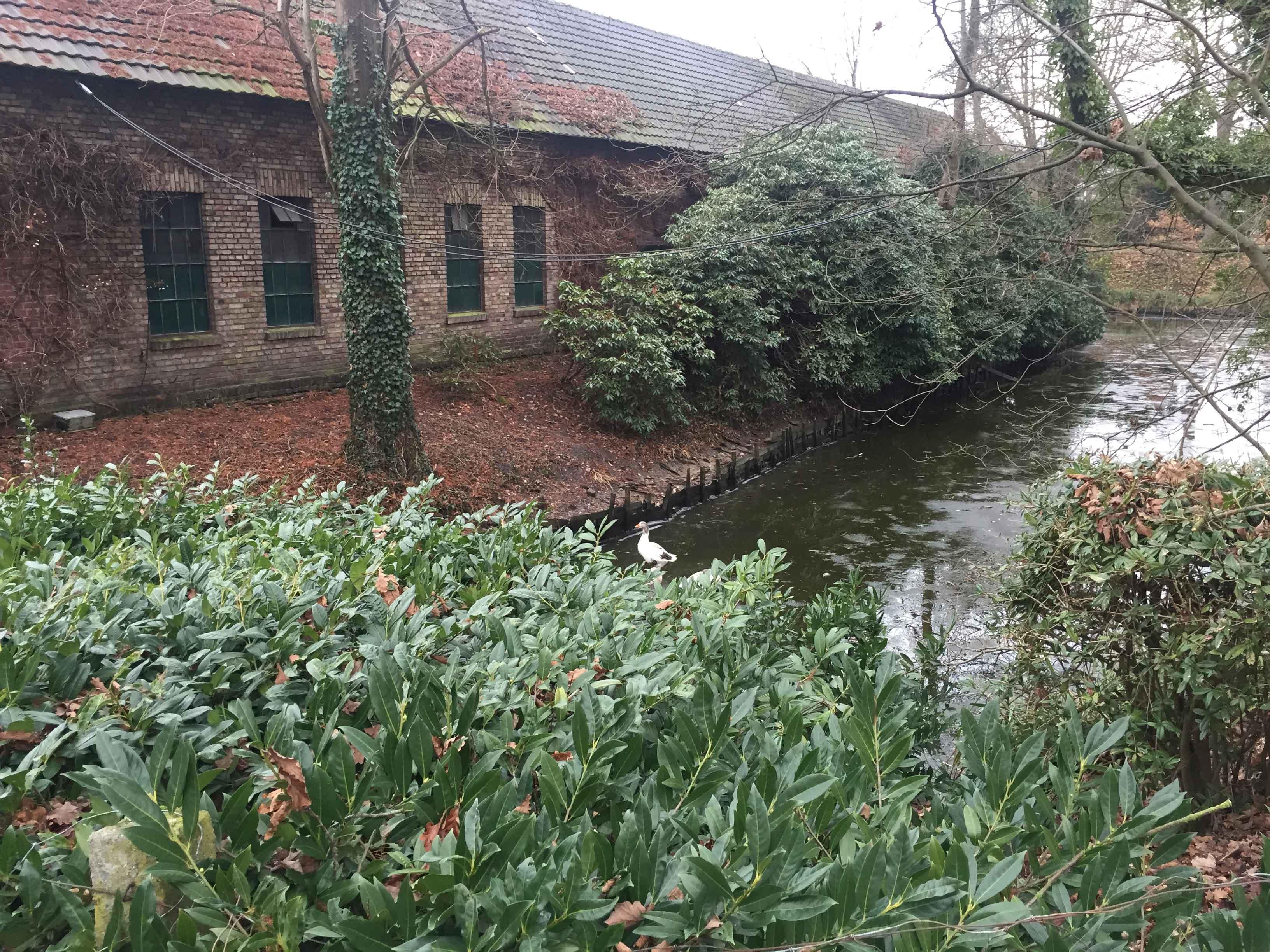 Der Stüttgenhof ist ein altes Rittergut, heute noch Landwirtschaftsbetrieb und Wohnort. In direkter Nachbarschaft befindet sich die RWE. Das gesamte Gebiet lädt zu ausgedehnten Spaziergängen ein.