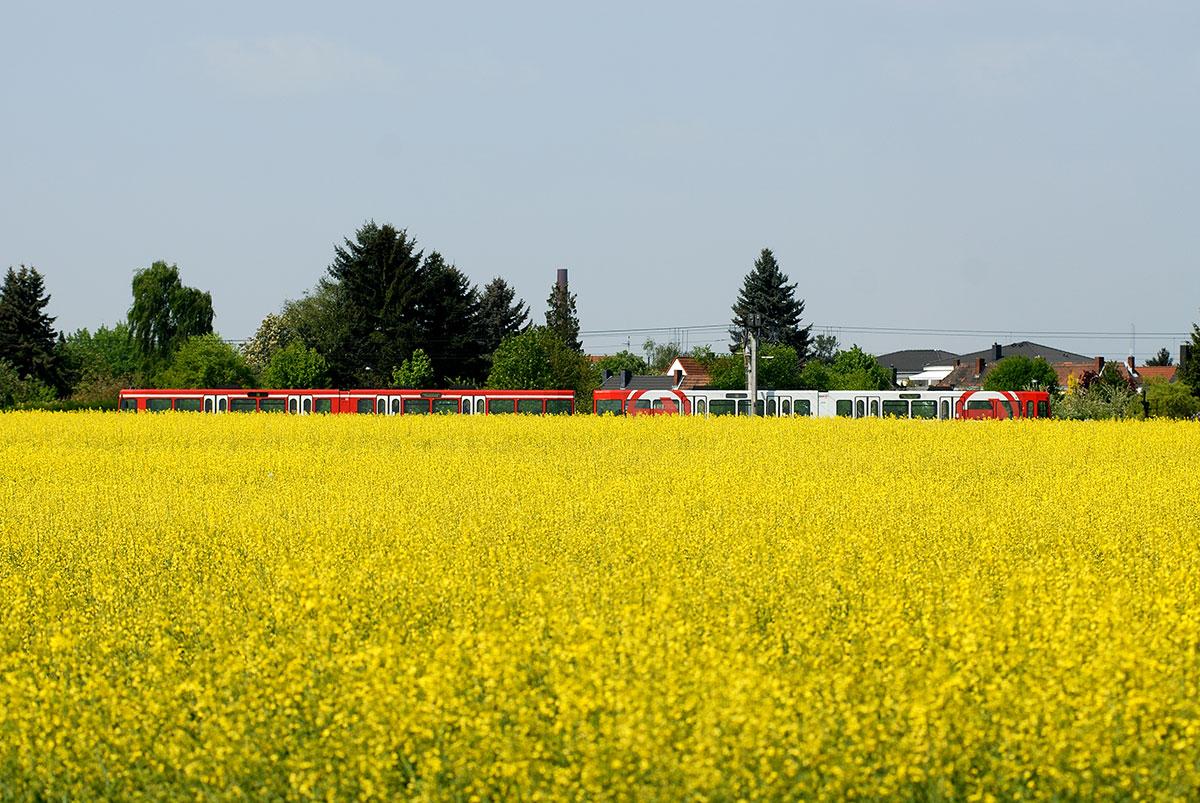 Hinter der Wichheimer Straße fährt die 13 im Frühling an blühenden Rapsfeldern vorbei.