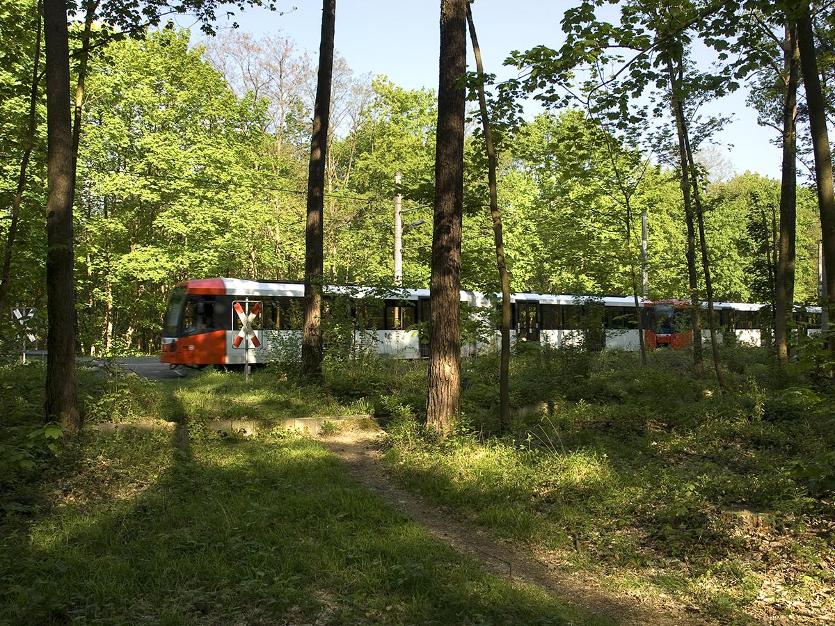 Linie 4 im Wald zwischen Odenthaler Str. und Schlebusch